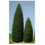Pine trees pack of 10, 1.5 inches tall