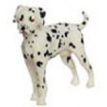 Dalmation Standing***Discontinued